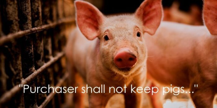 no pigs restrictive covenant