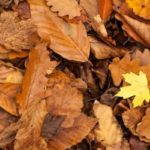 Autumn things in Kent