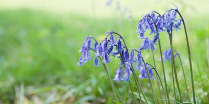 Things to do in Kent in Spring